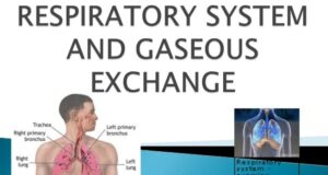 TOPIC 6: GASEOUS EXCHANGE AND RESPIRATION ~ BIOLOGY FORM 5