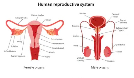 TOPIC 3: REPRODUCTION (II) ~ BIOLOGY FORM 6