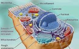 TOPIC 1: CYTOLOGY (II) ~ BIOLOGY FORM 5