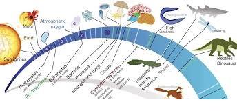 TOPIC 5: EVOLUTION ~ BIOLOGY FORM 6